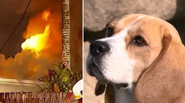 Snoopy and the fire. (9NEWS)