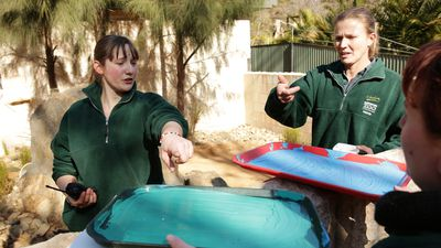 Zoo workers select paints for the furry artists. (AAP)
