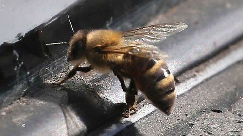 Bees, not snakes pose big health threat