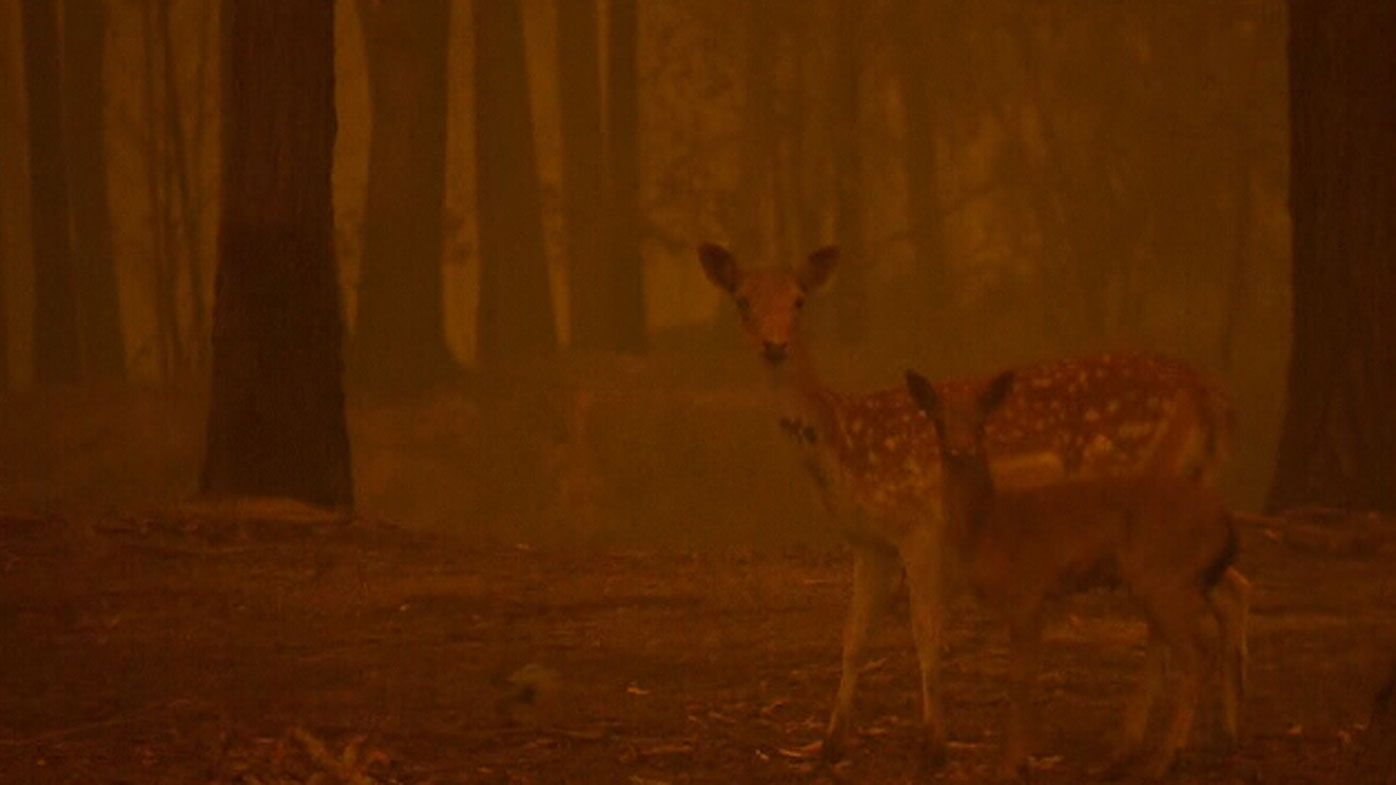 'Lump in her throat': Wildlife rescuers 'overwhelmed' by fire response