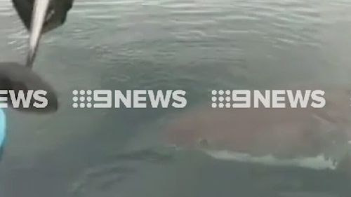The sighting follows two attacks near Margaret River earlier this week. (9NEWS)