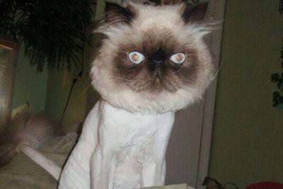 Image: <a href=http://cityrag.com/category/cats-rule/page/3/>cityrag.com</a>