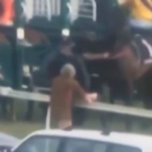 The handler who appears to punch the horse has been stood down. (Twitter)