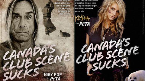 Iggy Pop, Kesha