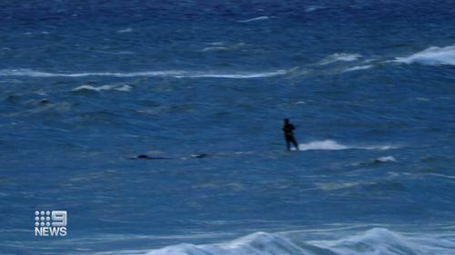 Christies Beach kitesurfer whale