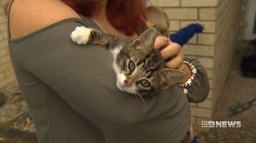 Cleo was brought back to life by the kind vets at Ripley Veterinary Hospital.