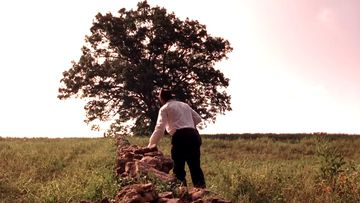Red, played by Morgan Freeman, finds the stone wall that leads towards the big oak tree that his friend and former fellow inmate Andy has told him about.
