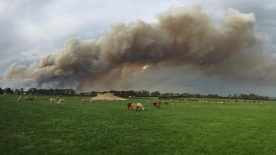 "Earlier Tuesday evening, animal refuge Edgar's Mission posted this image of some of its 250 animals, with the caption: ""We are safe for now as the wind has moved the fire north east but the fire is still out of control"". (Facebook / Edgar's Mission)"