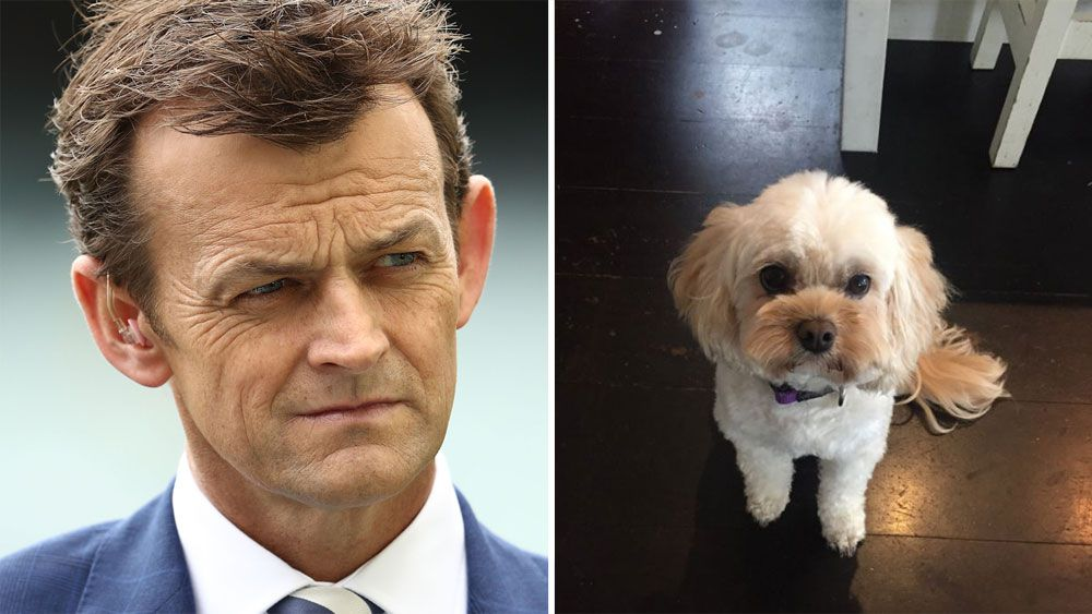 Former Australian wicketkeeper Adam Gilchrist takes to social media to find lost dog