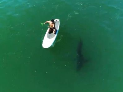 Orlando Bloom paddleboarding in the ocean with a shark.