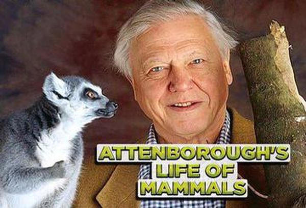 Attenborough's Life of Mammals