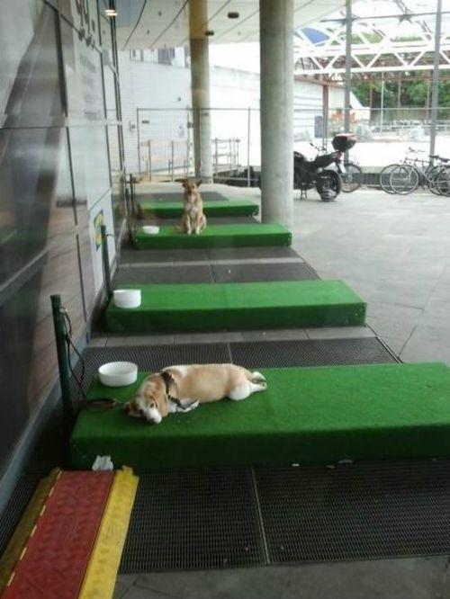 Ikea introduces 'dog parking'
