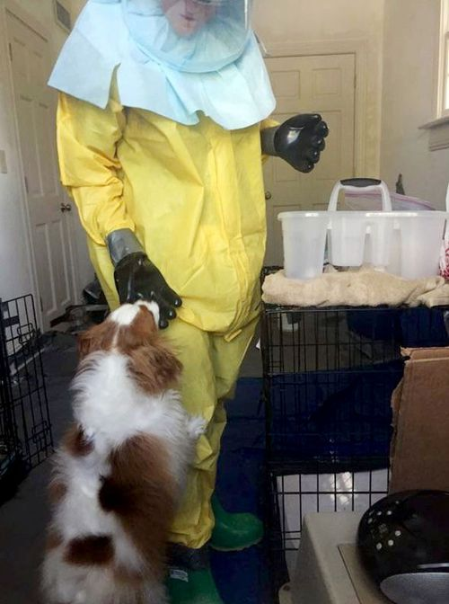Bentley interacts with a person wearing a HAZMAT suit as they investigate the apartment of US nurse Nina Pham after she is diagnosed with Ebola. (Getty)