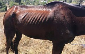Two thoroughbred racehorses die in alleged animal abuse case on Gold Coast property