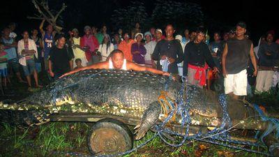 Monster  Philippines croc