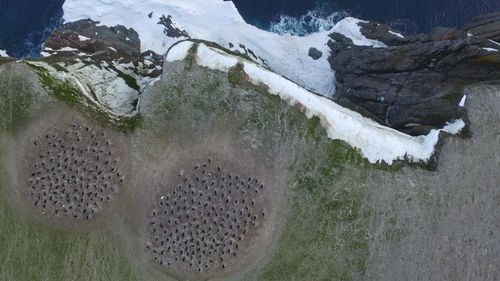 Quadcopter aerial imagery of Adélie penguin breeding colonies. (WHOI, Northeastern University, Courtesy Thomas Sayre McChord, Hanumant Singh.)