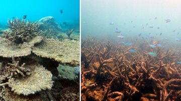 Great Barrier Reef 'under pressure' as Australia wrestles with coal-free future