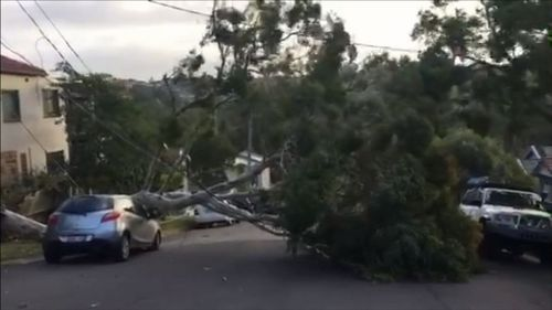 Trees across the city were brought down by the winds, causing up to 200 powerline-related hazards.