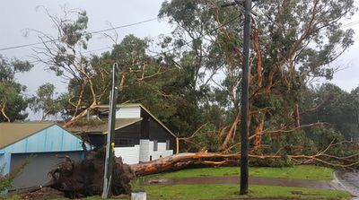 NSW Fire and Rescue have responded to multiple downed trees across the Blue Mountains.