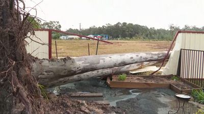 Trees toppled in Sanctaury Point