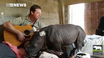 Rhino calf lulled to sleep by Aussie zookeeper's serenade