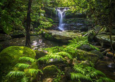 Iriomote Island's lush subtropical forests