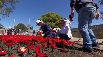 The hand-knitted poppies mark the Australian soldiers who died in World War One.