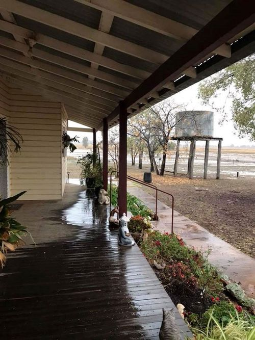 """Sue Brassington from Eumungerie, NSW said: """"We are very grateful for this liquid gold,"""" after rain hit regional NSW"""