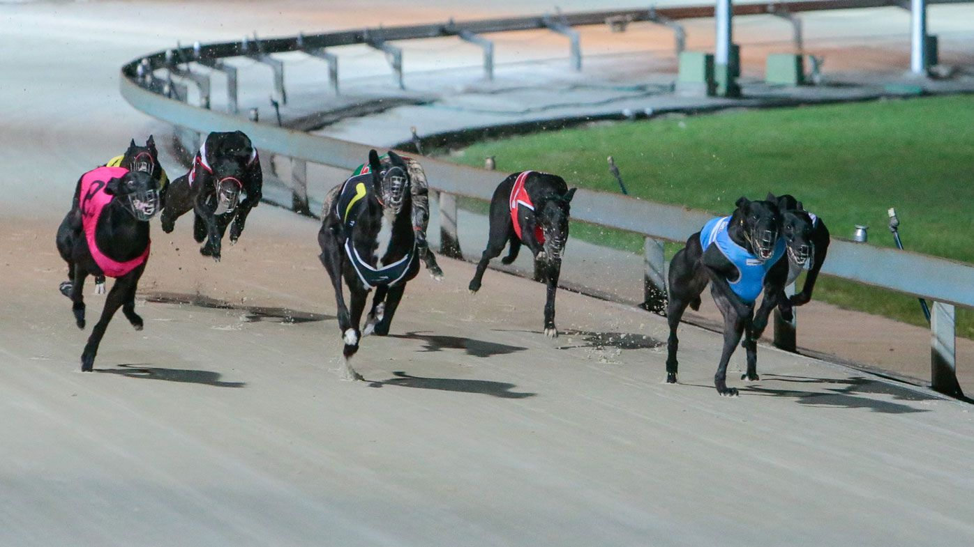 NSW's iconic Dapto Dogs ceases operations after negotiation breakdown