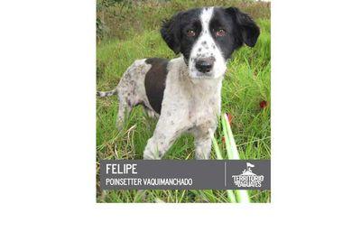 Spotty Felipe would make a great friend.