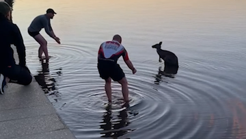 Kangaroo rescued from chilly Canberra waters
