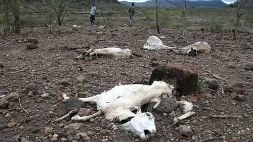 Millions of people in need of 'urgent aid' as Ethiopia faces new drought