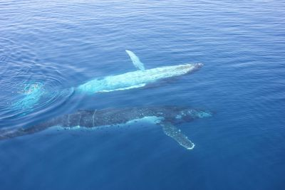 3. Hervey Bay Premium Whale Watching Cruise, Hervey Bay, Queensland