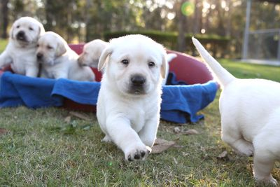 Guide dogs aren't only adorable.<br>