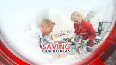 Saving our koalas