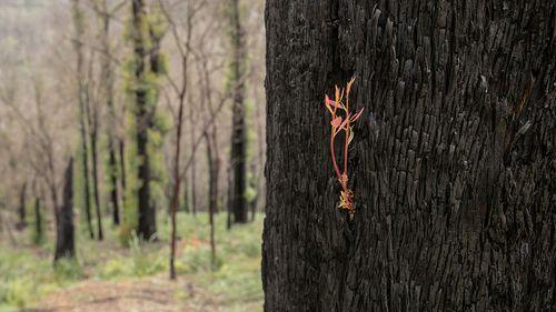 Multimillion dollar boost to bushfire recovery efforts