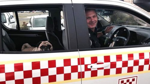 Pug life: Victorian pug becomes country firefighter for a day