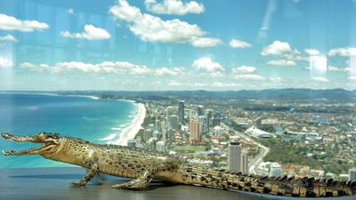 "<p>He enjoyed the view from Q1 on the Gold Coast. </p><p>""Security was called when we were in the Q1 building on the Gold Coast because someone thought he was too dangerous to be there,"" David and Kaz said. </p>"