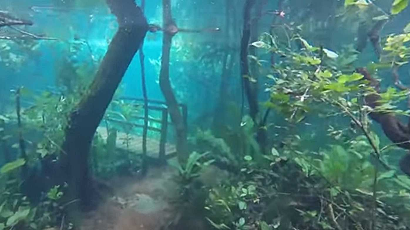Spooky underwater forest in Brazil goes viral