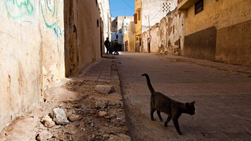 UK man dies from rabies after cat bite in Morocco