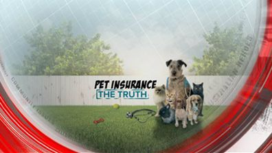Pet insurance - the truth