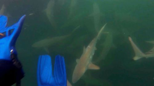 Close calls with sharks caught on film