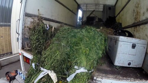 The raids were part of the Cannabis Eradication Program (CEP). (Supplied)