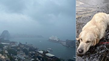 'More exciting than Xmas': Dramatic weather U-turn celebrated