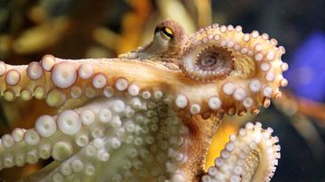 An experiment with MDMA has revealed octopuses' similarity to humans.