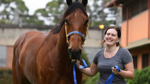 """Stablehand Rachael Wilkinson leads """"Deploy"""" around the yard at Rosehill Gardens Racecourse. (AAP)"""