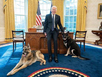 Joe Biden's dogs pose in the Oval Office