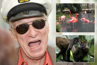 Hugh Hefner doesn't just collect bunnies, his Playboy Mansion is also home to flamingos and spider monkeys.