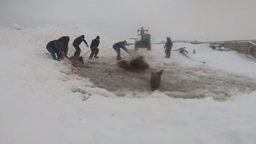 Farmers rescue horses from ice hole in Russia.