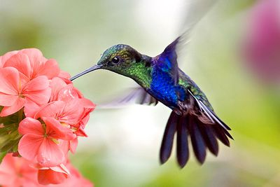 If you actually had the metabolism of a hummingbird, you would die very quickly